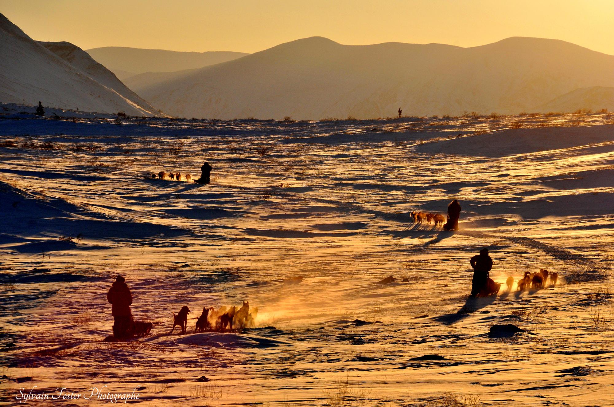 Traineaux à chiens, Yukon