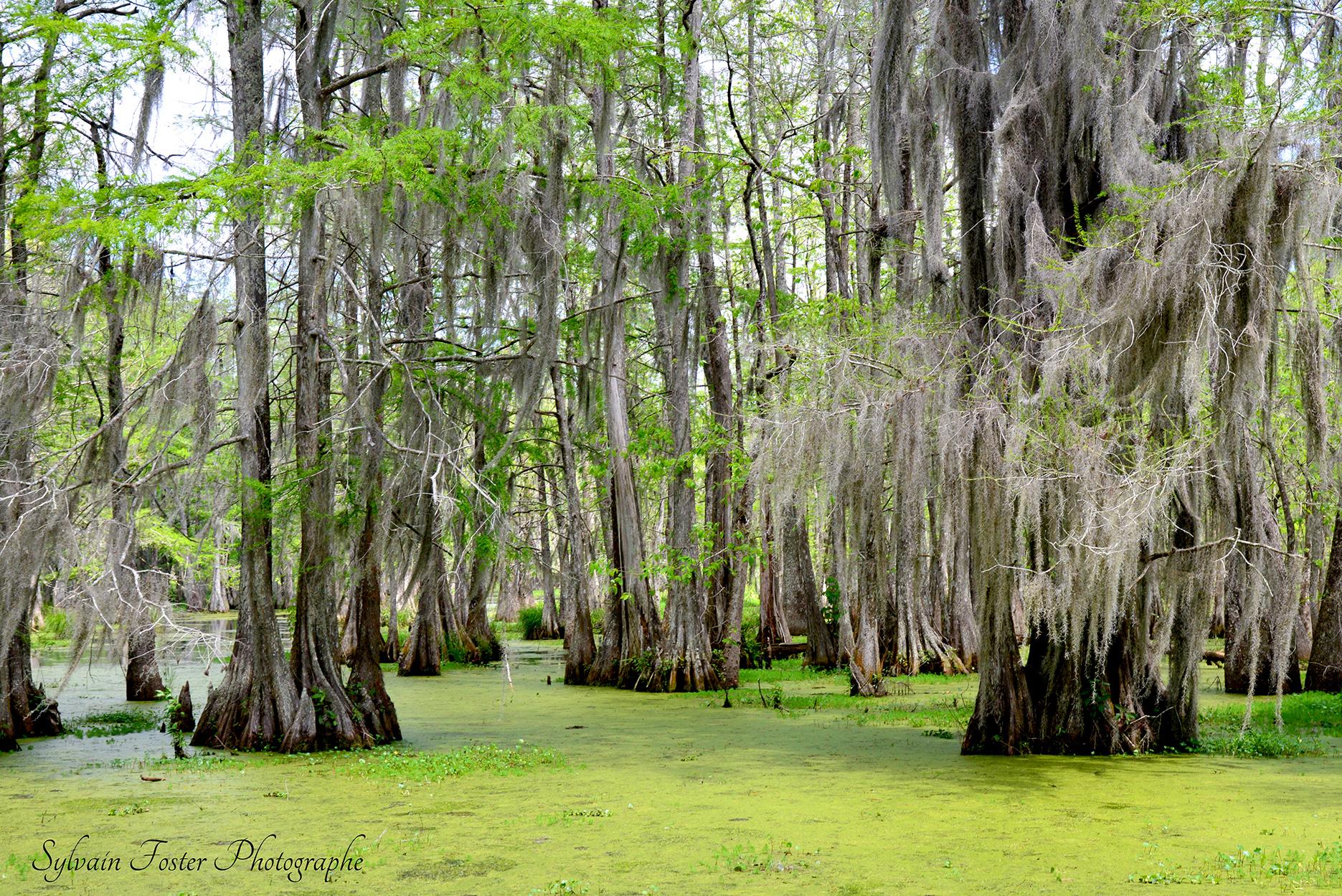 Swamp, Louisianne