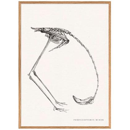 lamina esqueleto pajaro agachado