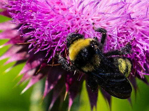 Notecard Set of 10 - Bee