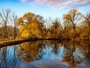 Nature photo - autumn/ winter trees - reflection