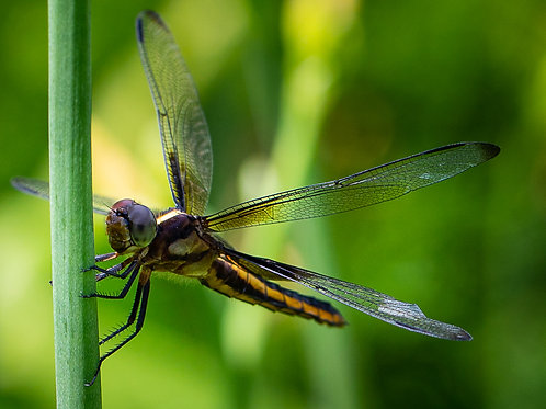 Notecard Set of 10 - Dragonfly