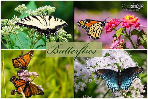 Butterflies - Notecards Set of 4