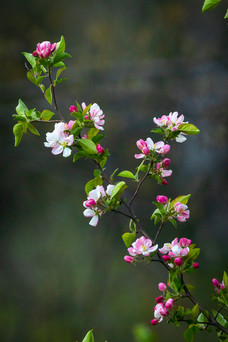Nature photo - spring blossom - perfect for a notecard