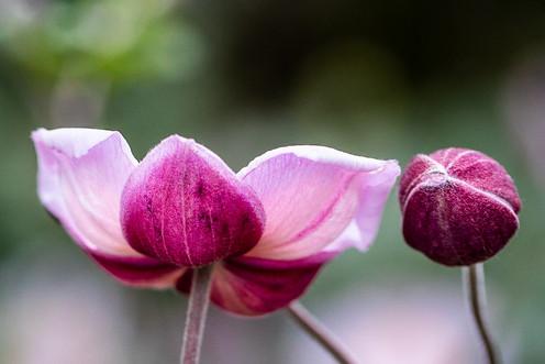 Pink spring blossom - unique angle