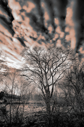Bare tree, interesting clouds - nature photo