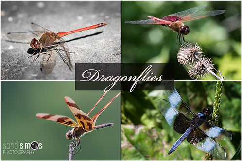 Dragonflies - Notecards Set of 4