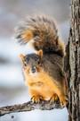 Squirrel - nature photo