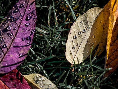 Notecard Set of 10 - Leaves