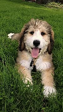 Puppy in yard