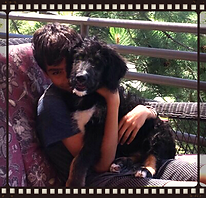Bernedoodle and little boy