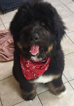 Puppy with bandana