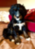 puppy posing