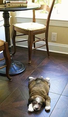 Puppy asleep in kitchen