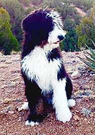 Dog in desert
