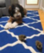 Dog with baby ducks