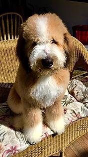 Puppy posingfor camera
