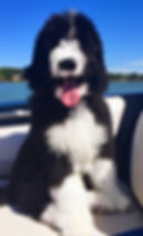 Dog on boat