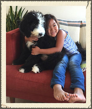 Bernedoodle and little girl