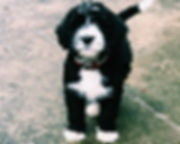 Puppy on sidewalk