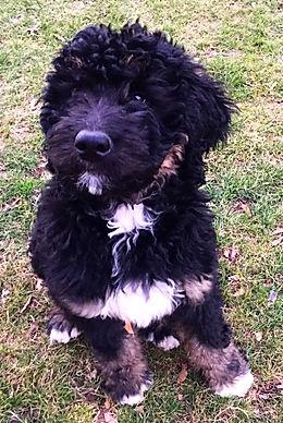 Puppy in grass
