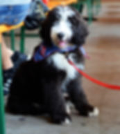 Puppy on a leash