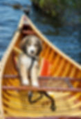 Puppy in a canoe