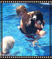Bernedoodle swimming