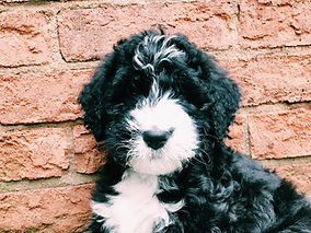Puppy posing for picture