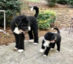 Koda and Chloe