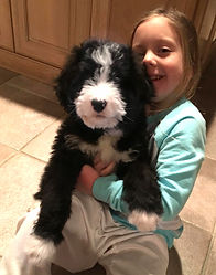 Bernedoodle with girl