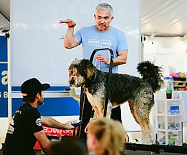Cesar Milan and MudPie