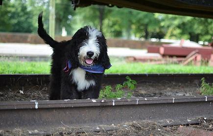 Puppy under train