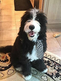 Dog with tie