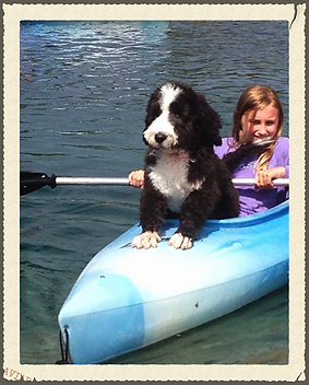 Bernedoodle in boat