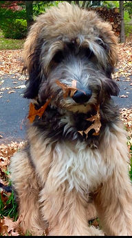Dog in leaves