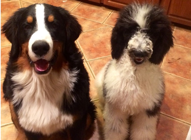 dogs posing for camera