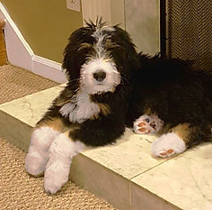 Puppy on hearth