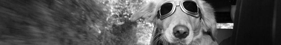 Der Erstkontakt is a Hund. Nicht bei LocoMotiv :)