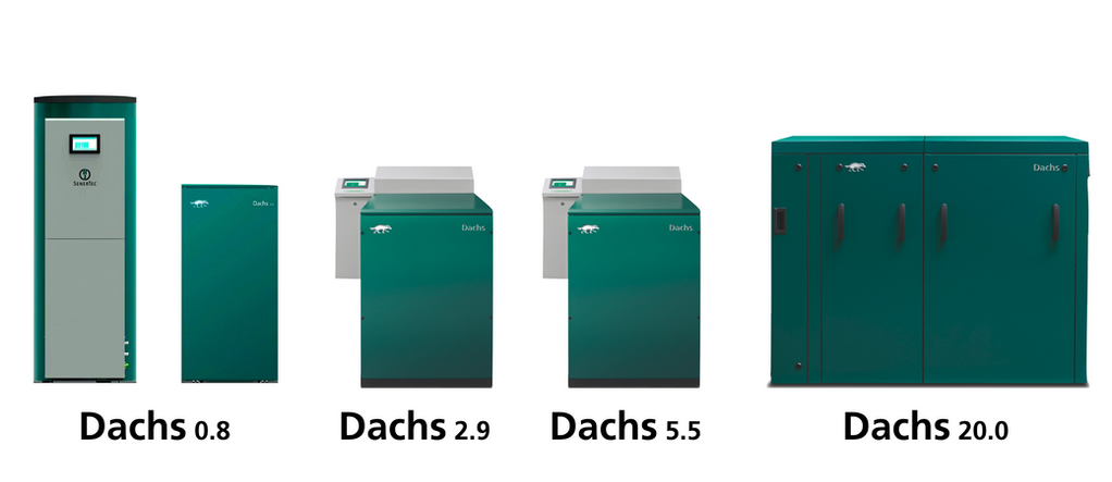 DachsFamilie2019.png