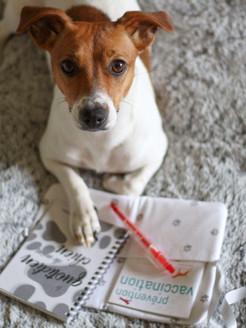 Le quotidien de mon chien Joy 2.jpg