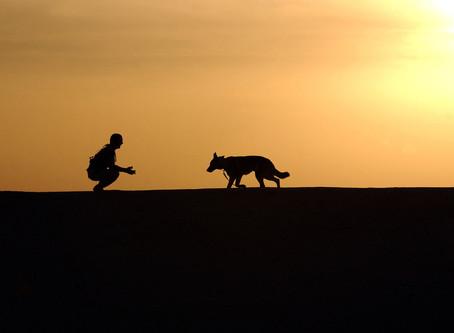 Quelle race de chien pour Toi ?