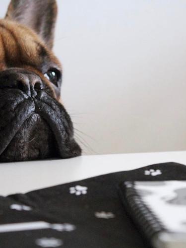 Carnet Le quotidien de mon chien Malo.jp