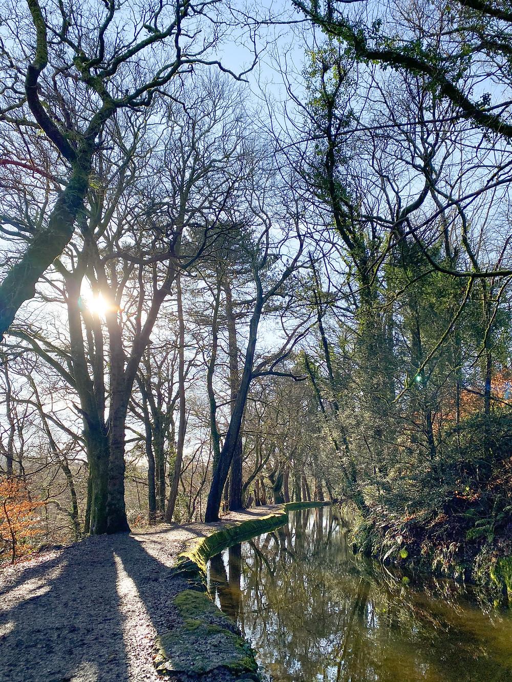 Tavistock Canal on a sunny, winter's day.