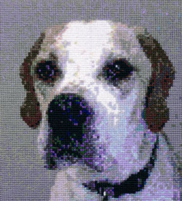 tapestry of Rascal from photo