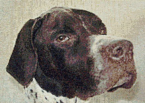 cross stitch of Dougal from photo