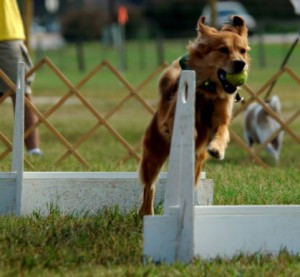 Finding Focus from Flyball