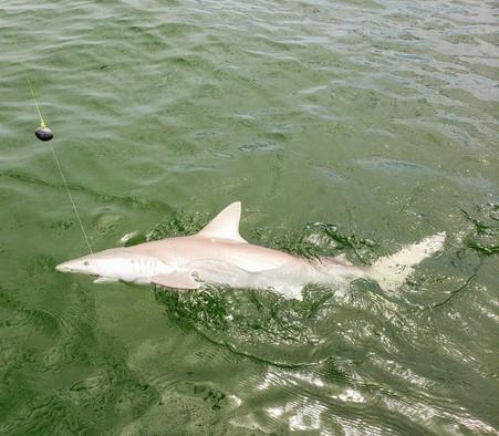 sharkfishingcharleston.jpg