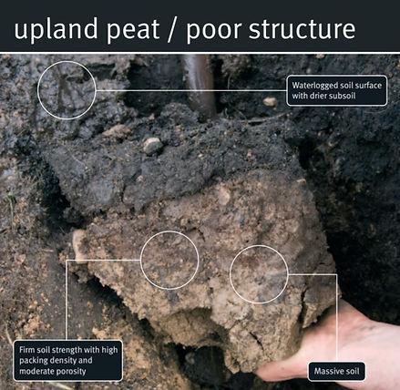 peat poor.jpg