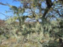 Moor trees.jpg